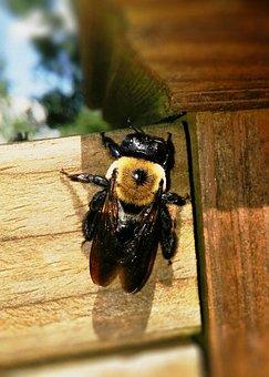log home carpenter bee